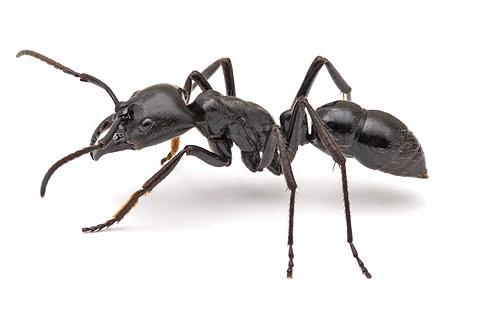 Горные муравьи. Оздоровительная продукция Fohow (Феникс)
